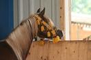 Pferdeallerlei